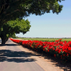 Barossa-Exclusive-Tours-Gallery_0000_31