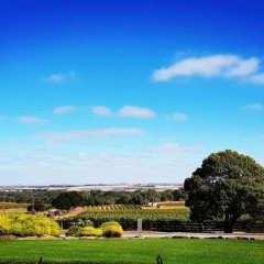 Barossa-Exclusive-Tours-Gallery_0001_02