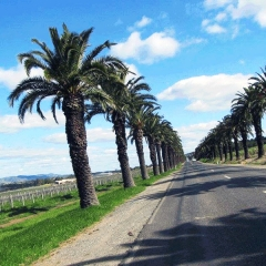 Barossa-Exclusive-Tours-Gallery_0006_37