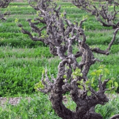 Barossa-Exclusive-Tours-Gallery_0009_40