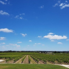 Barossa-Exclusive-Tours-Gallery_0019_20