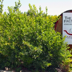 Barossa-Exclusive-Tours-Gallery_0013_44