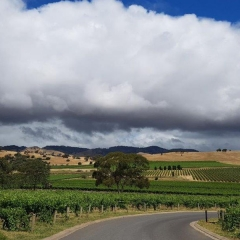 Barossa-Exclusive-Tours-Gallery_0024_25